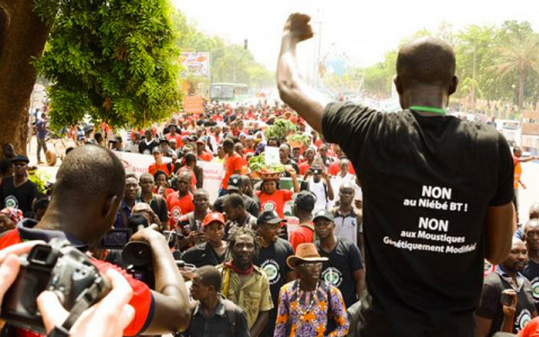 West African Communities Reject Gene Drive Experiments