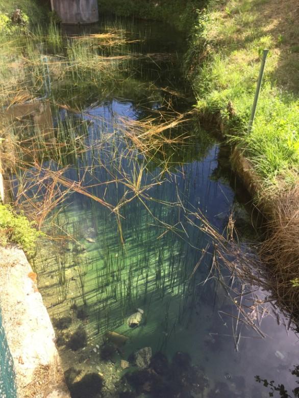 Village water source